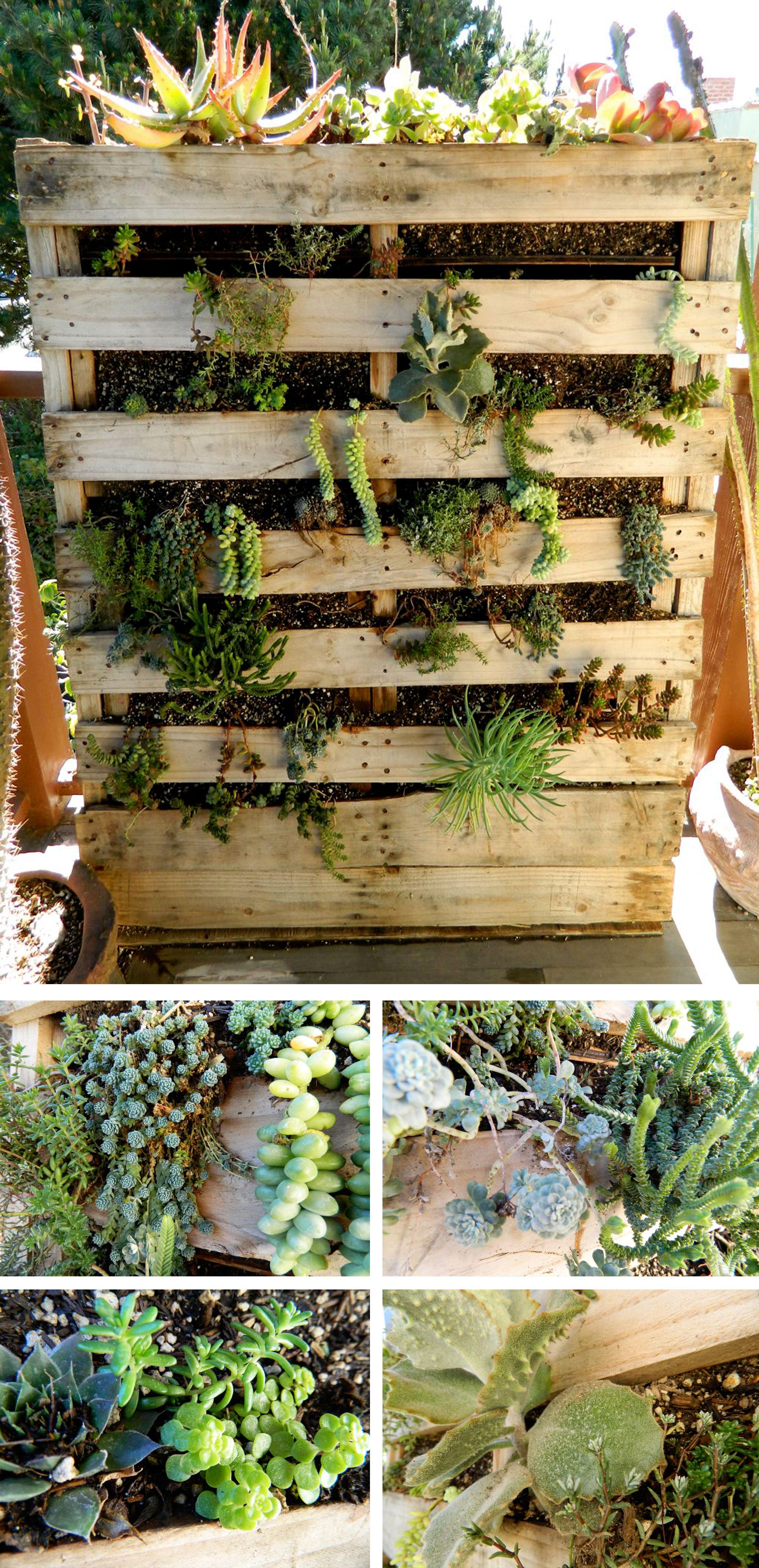 Pallet Succulent Wall Plants