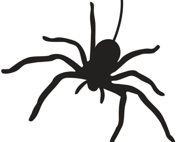 halloween-kurbis-schnitzvorlagen-ausdrucken-spinne | Kleine Hexe ...