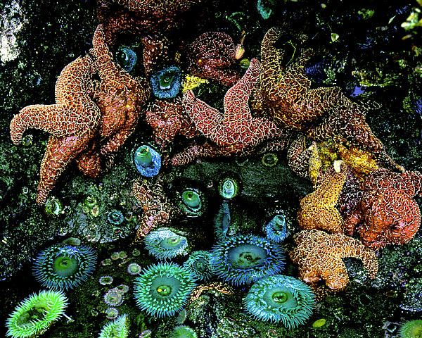 Pacific Northwest Tide Pool Time Lapse Stock Footage Video ...  |Pacific Northwest Tide Pool