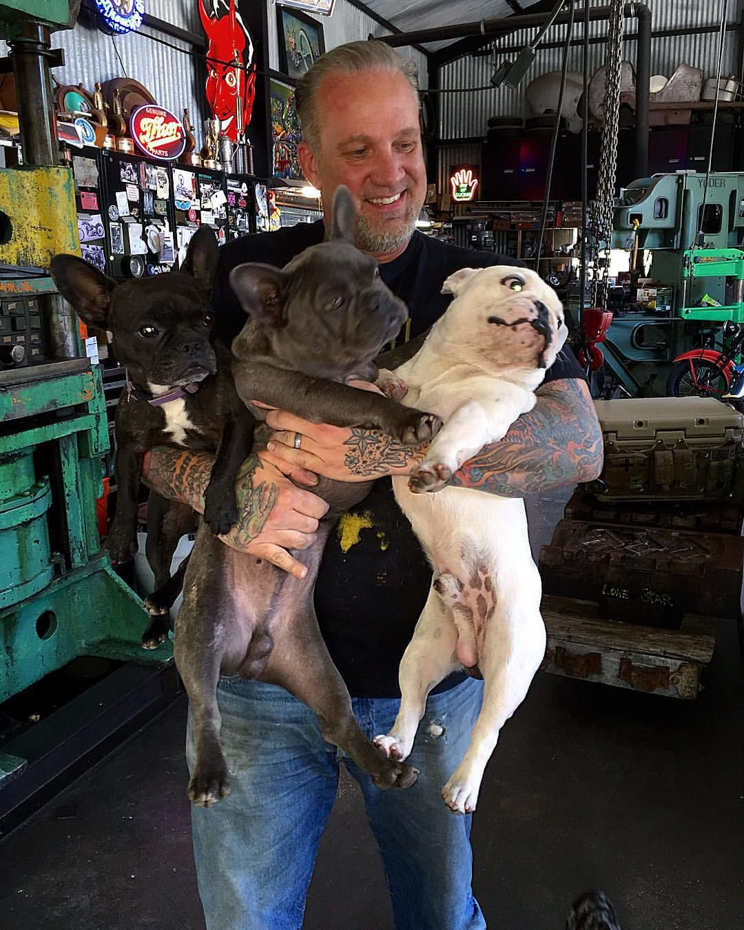 jesse james and his french bullies. | english bulldog | french