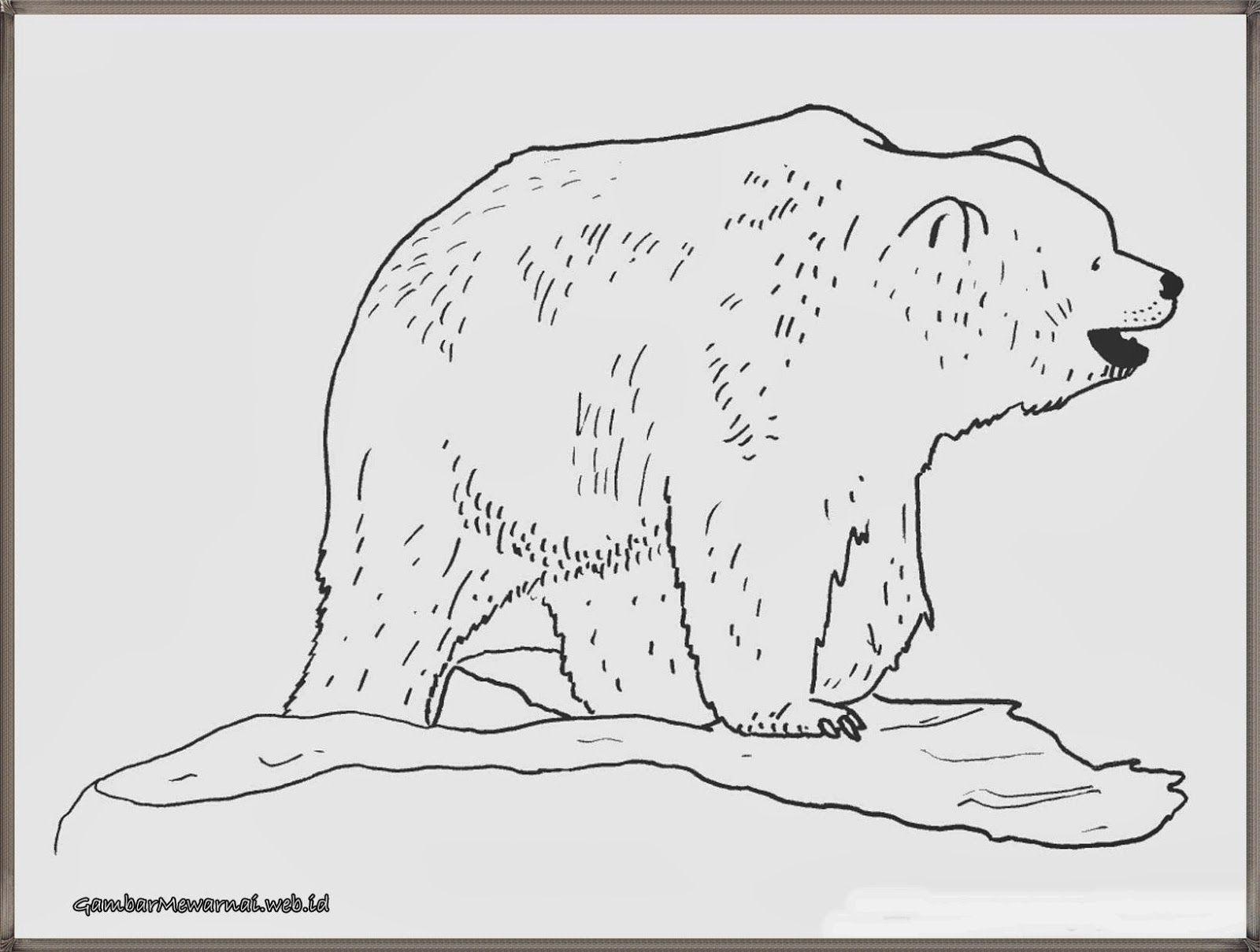 gambar beruang untuk mewarnai