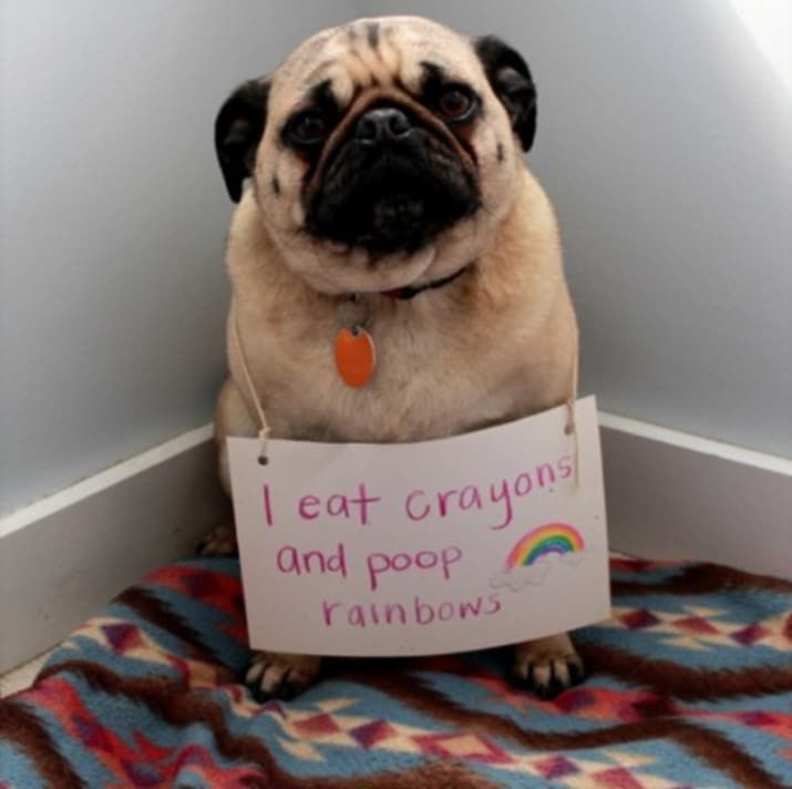 15 Things That Dogs And ONLY Dogs Look Cute Doing