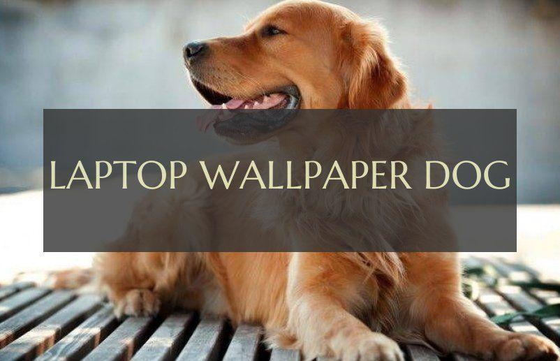 Laptop Wallpaper Hund Laptop Wallpaper Dog With Images Dogs Laptop Wallpaper Wallpaper