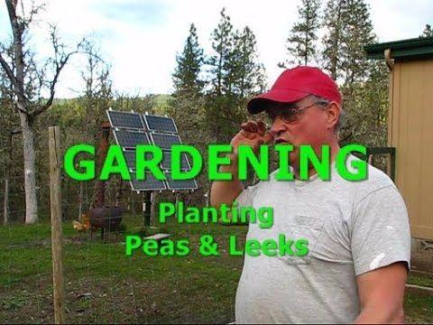GARDENING - Planting Peas and Leeks
