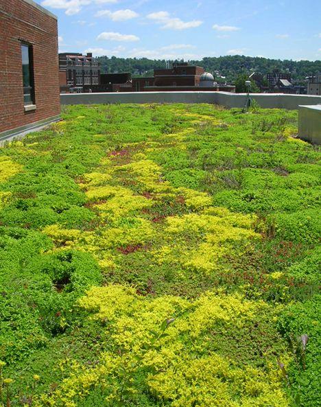 West Virginia University Green Roof