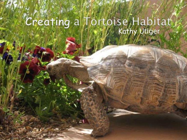 Creating a tortoise habitat Tortoise habitats
