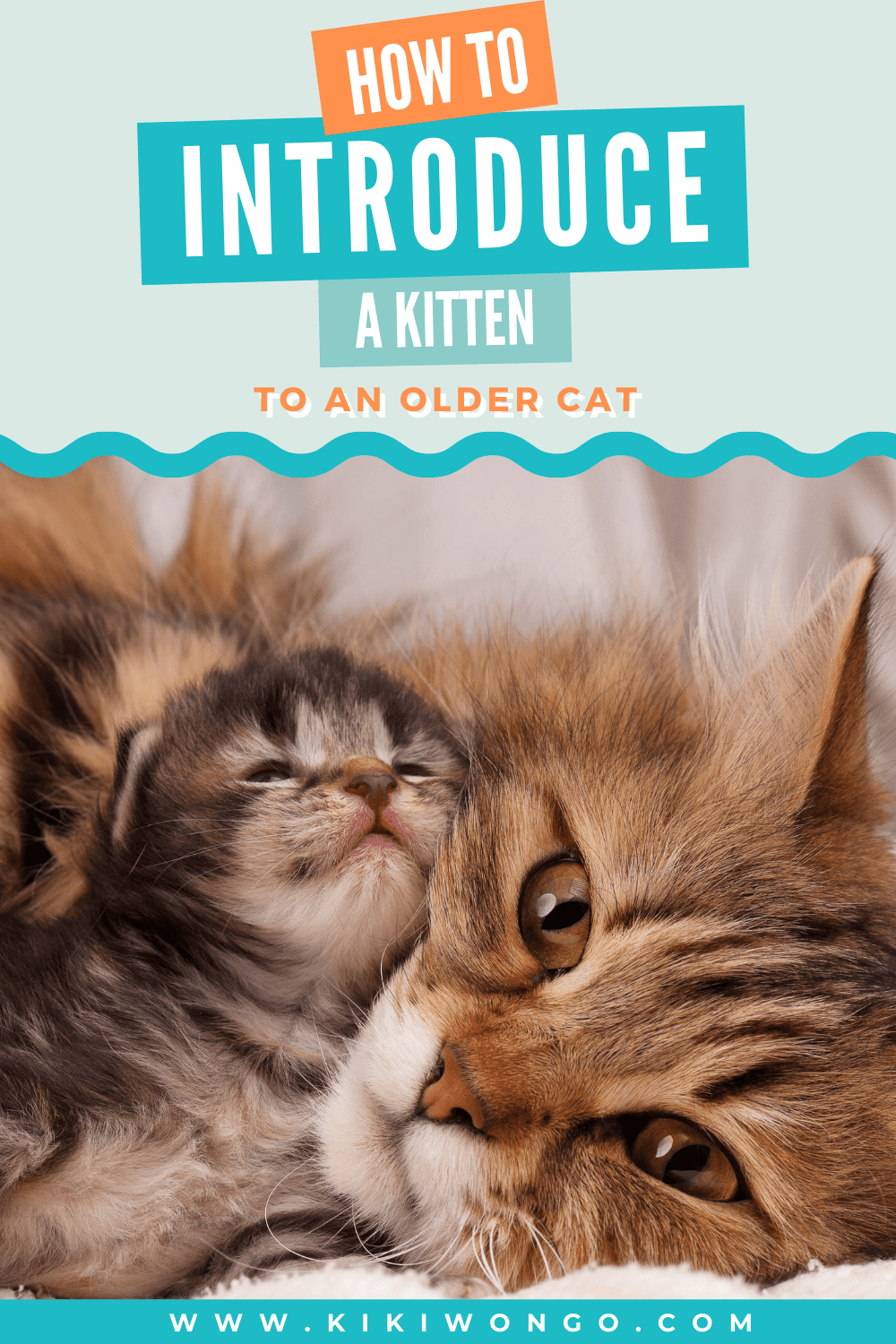 How To Introduce A Kitten To An Older Cat In 2020 Older Cats Cats Kitten Care