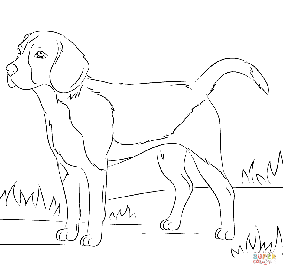 Beagle dog Coloring page | Free Printable Coloring Pages | Coloring ...