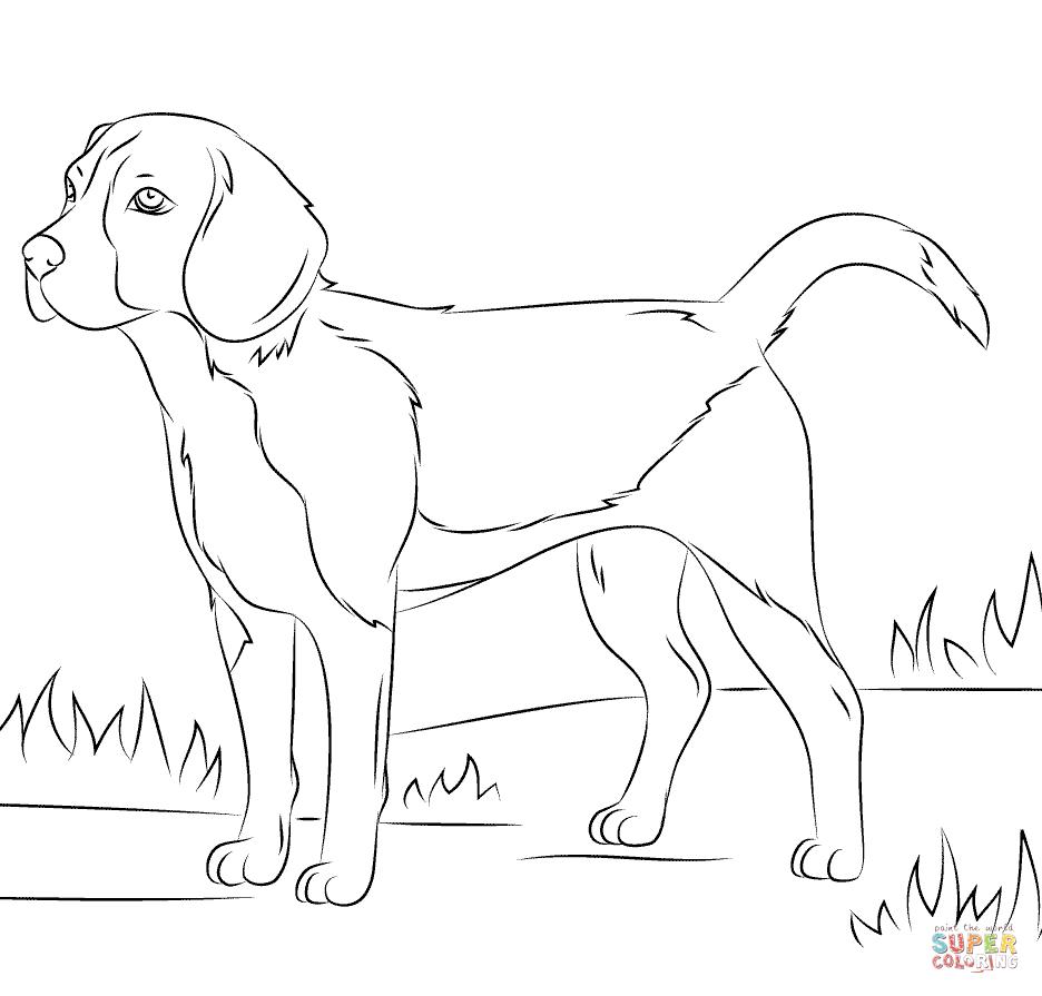 Beagle Dog Coloring Page Free Printable Coloring Pages Dog Coloring Page Puppy Coloring Pages Beagle Colors