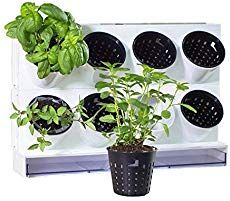 Photo of 13 Indestructible Indoor Herbs Even You Can Keep Alive