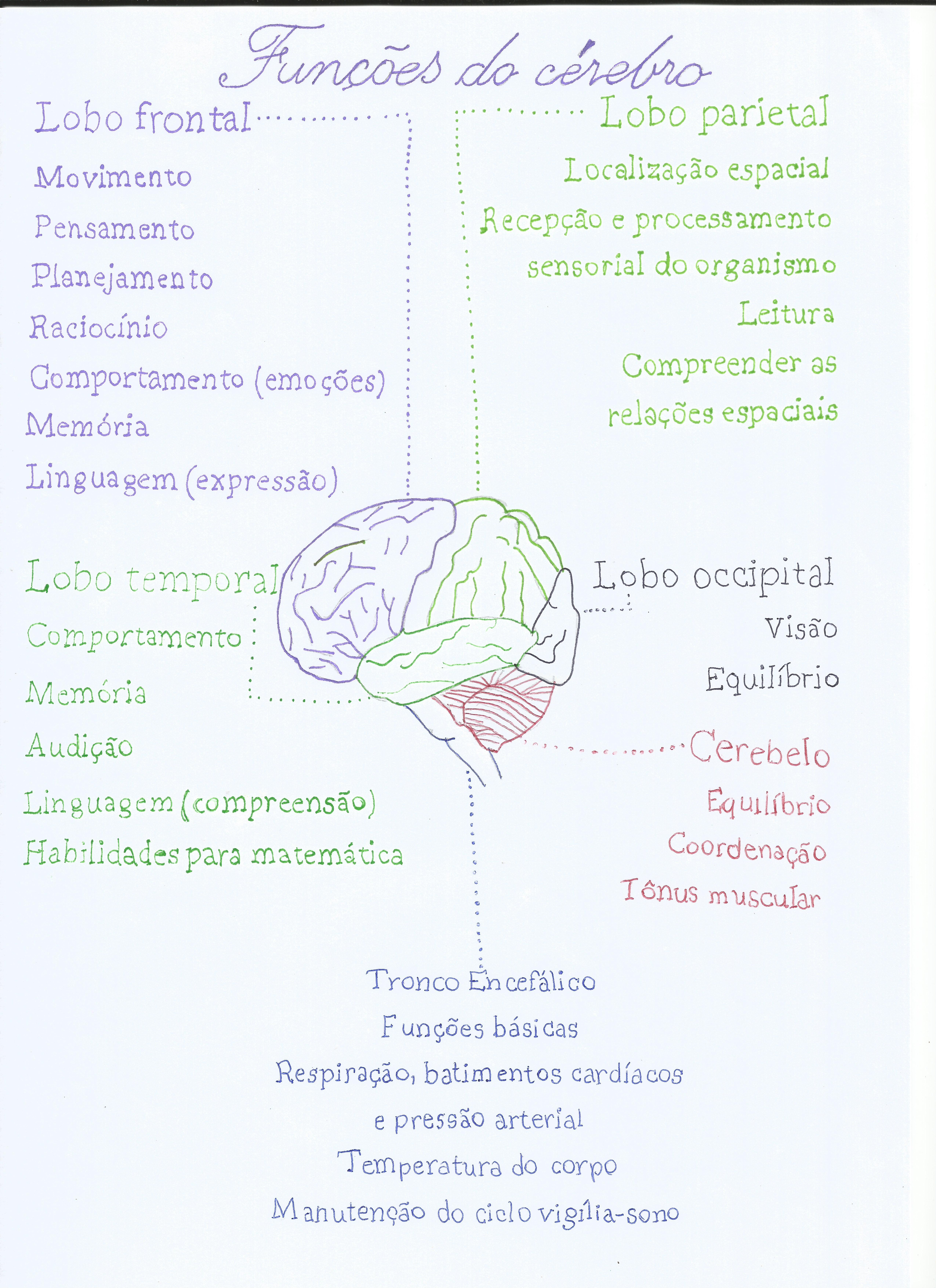 Funções do encéfalo cérebro lobos Lobo parietal Lobo frontal Lobo ...