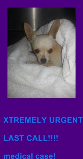 MURDERED --- Urgent Dogs of Miami - A1676862 this pet qualify for SUN program under category D-1 Dog presented to the clinic because bloody diarrhea / parvo negative.  On presentation dog is very lethargic . MM: light pink tacky . Abd : soft on palpation. plenty of gass palpated.  Dog is very dehydrated.  Has bloody diarrhea.  https://www.facebook.com/urgentdogsofmiami/photos/pb.191859757515102.-2207520000.1422746162./920644077969996/?type=3&theater