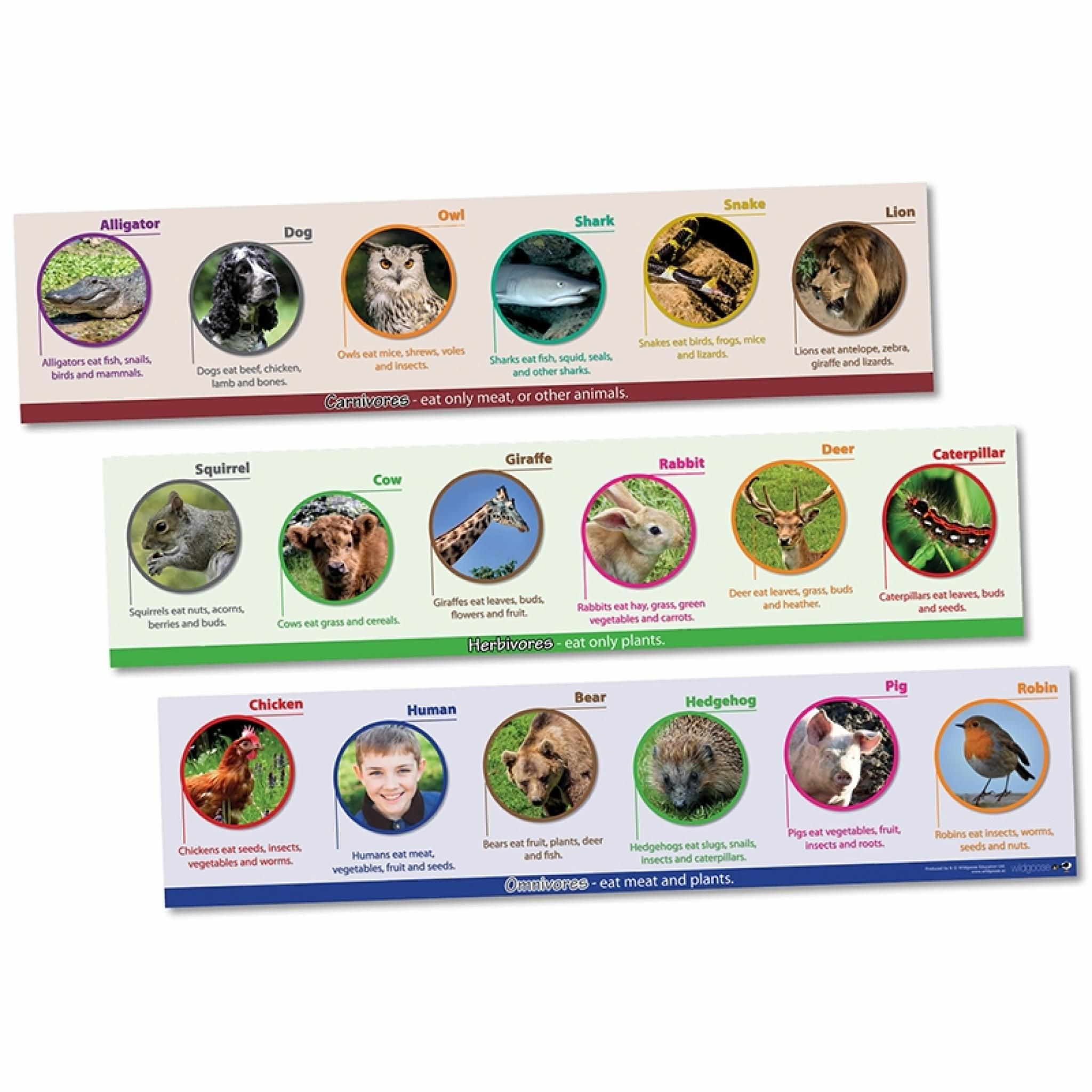Herbivores & Omnivores frieze Animals, Teaching