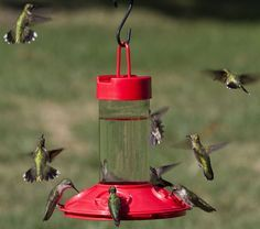 hummingbird flowers attract | For convenience, many people simply purchase commercial nectar.
