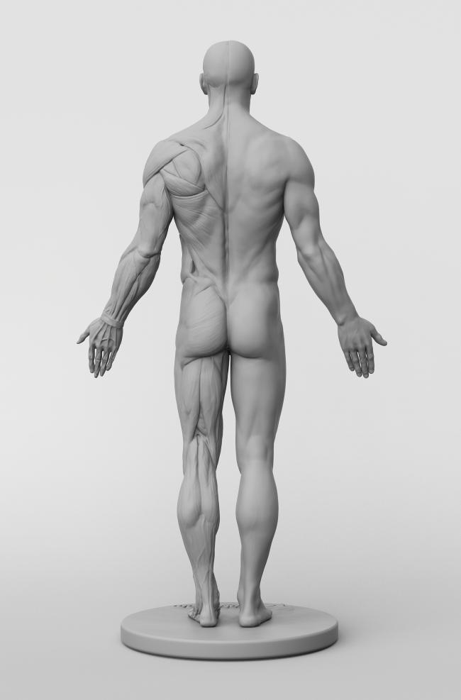 46+ Anatomy figures ideas