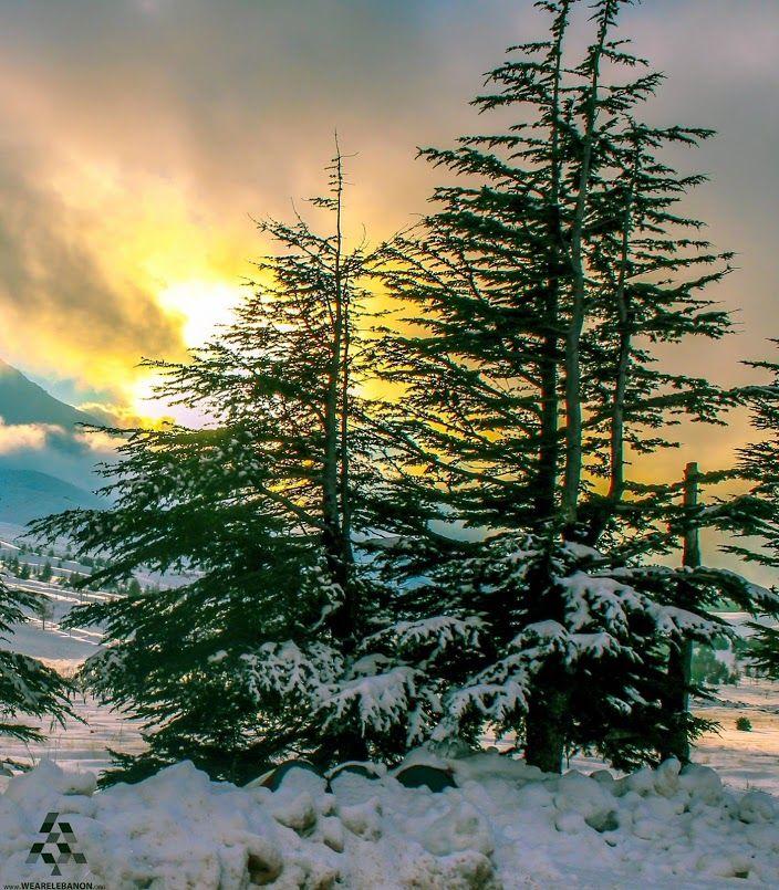 Sunset from #Bcharri cedars  الغروب من أرز #بشري  By Ramzi Semrani  #Lebanon #WeAreLebanon