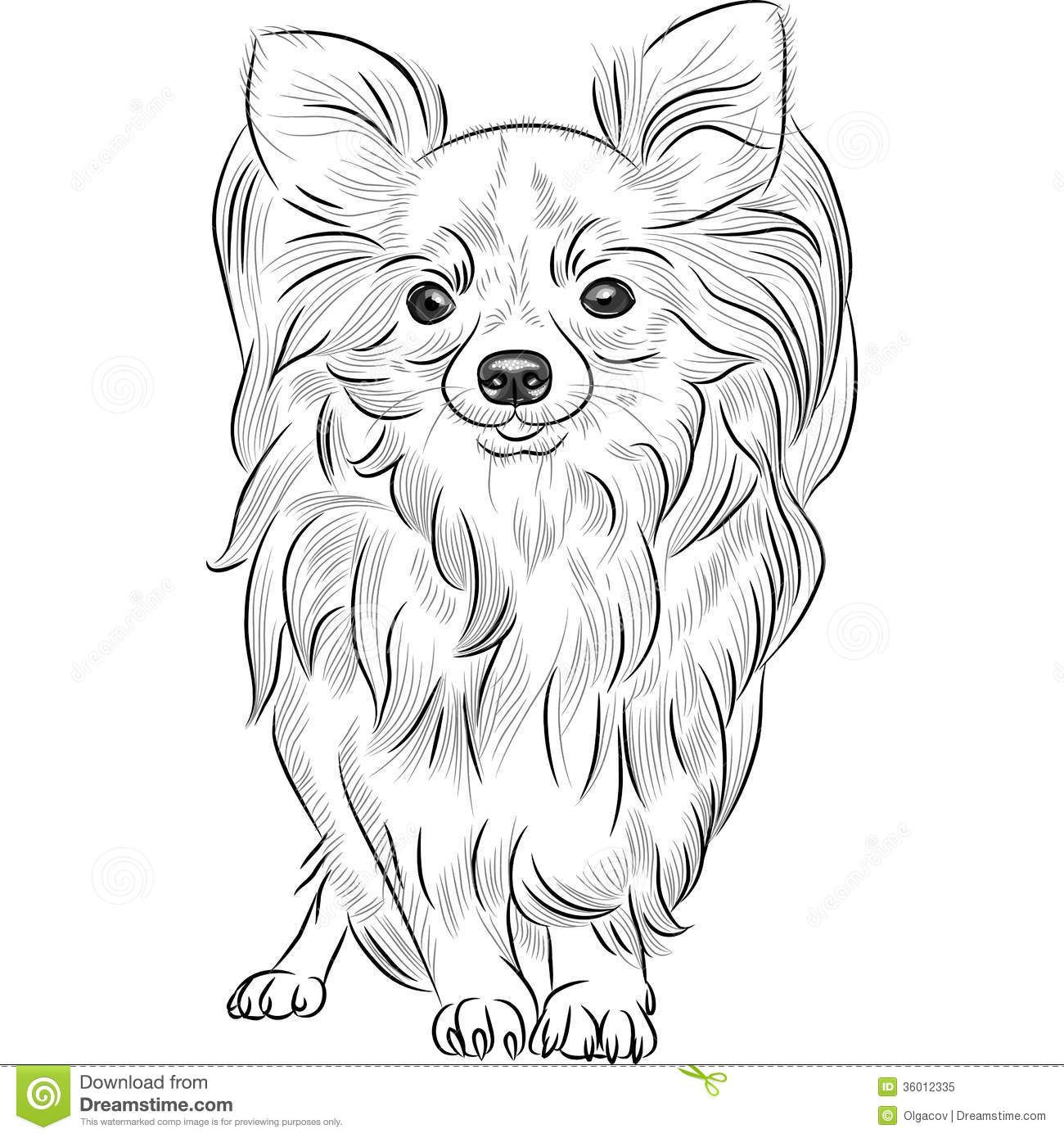 chihuahua sketch - Google Search | Illustrations | Pinterest