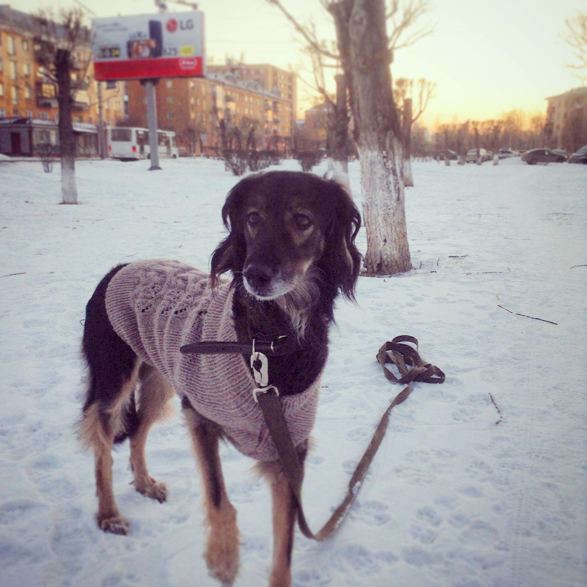 схемы вязанной одежды для маленьких собак