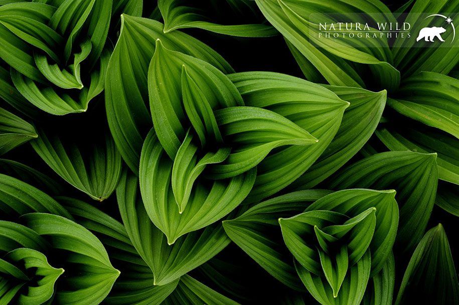 Natural Patterns Patterns In Nature Nature Inspiration Nature