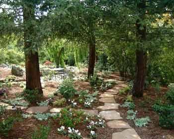 plants under redwoods garden