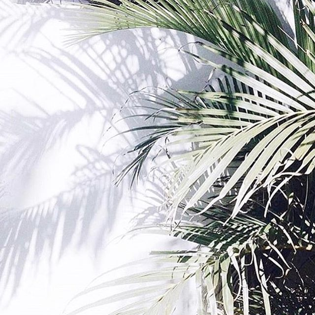 PALMS | Image via @covebody | #palms #tropical #mood #summer  #Regram via @chosenbyoneday