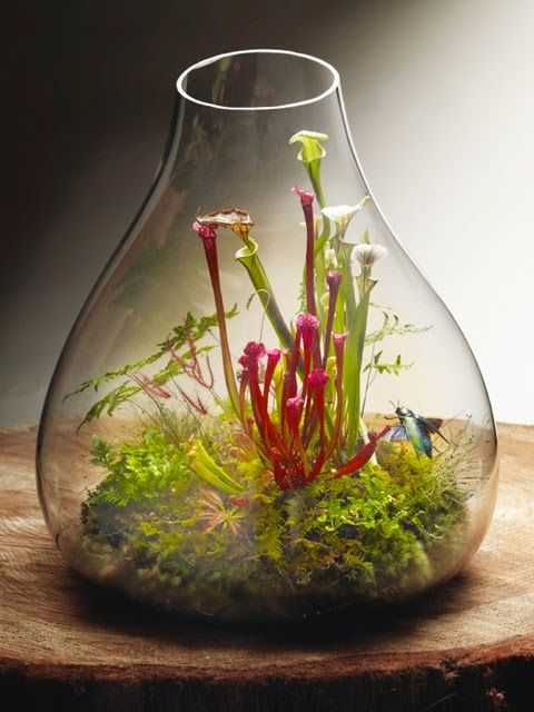 009+BEAUTIFUL+TERRARIUMS+SMALL+AND+TINY+GARDENS+YOU+CAN+GROW+ON+TABLE+TOPS.jpeg (480×640)