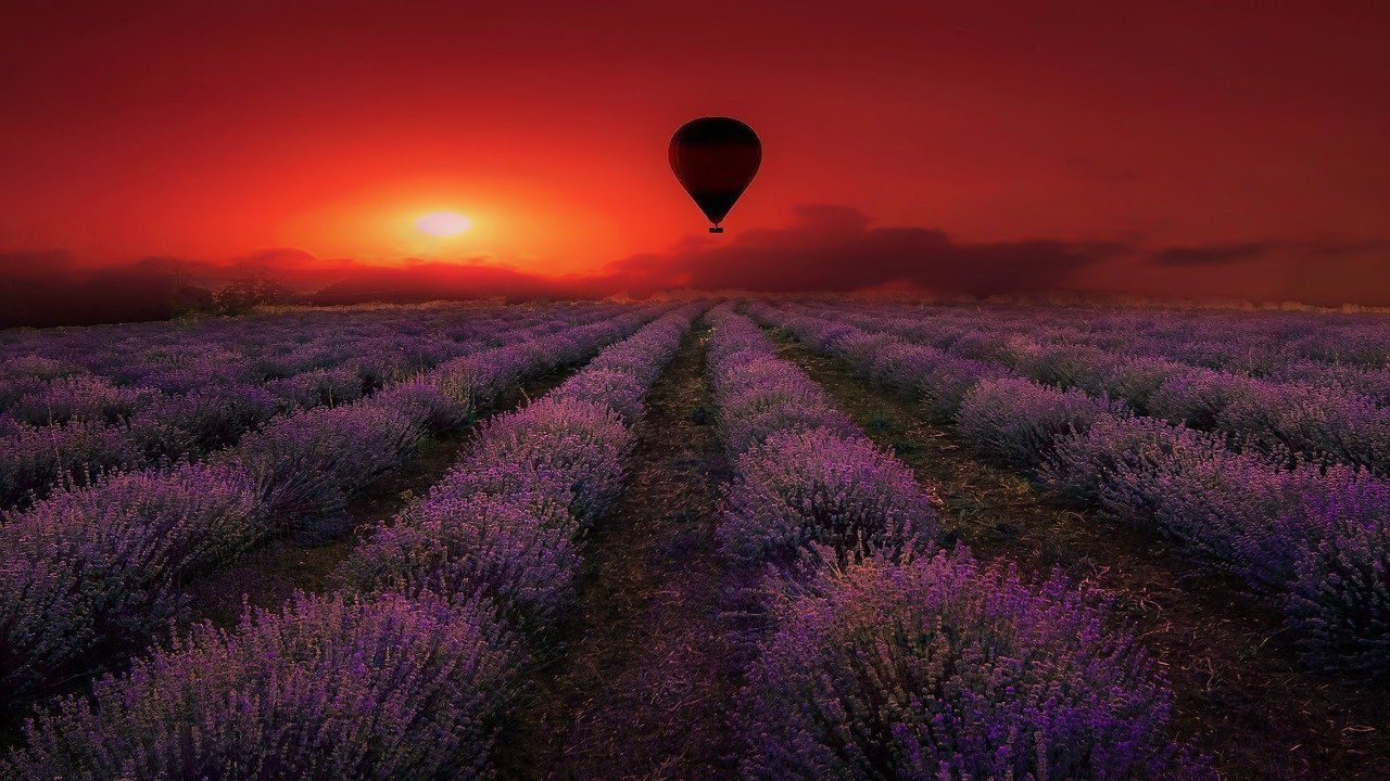 The Lavender Fields Of Avignon In The Provence Region Of France In 2020 Places To Visit Frequent Flyer Miles Southern Beach