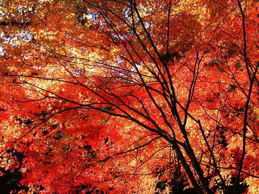 一番好き デスクトップ 壁紙 秋 画像あり 最高の壁紙 紅葉