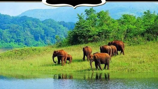 Luxury Kerala Honeymoon Packages - Paras Holidays