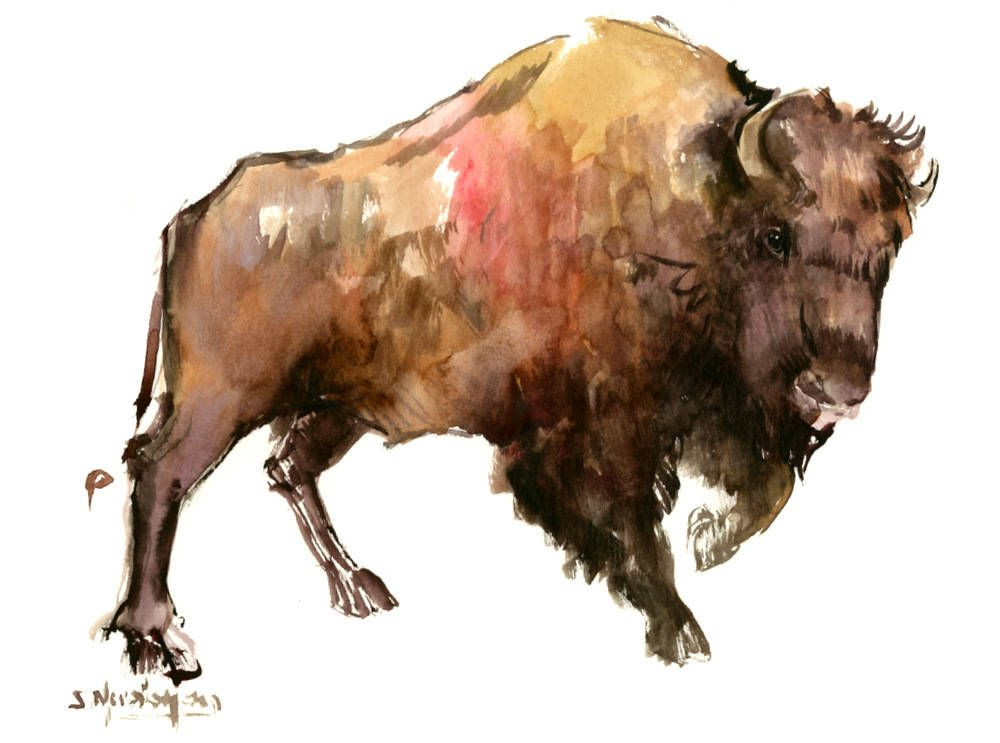 Bison Artwork Animal Art Bison Wild Animals Watercolor