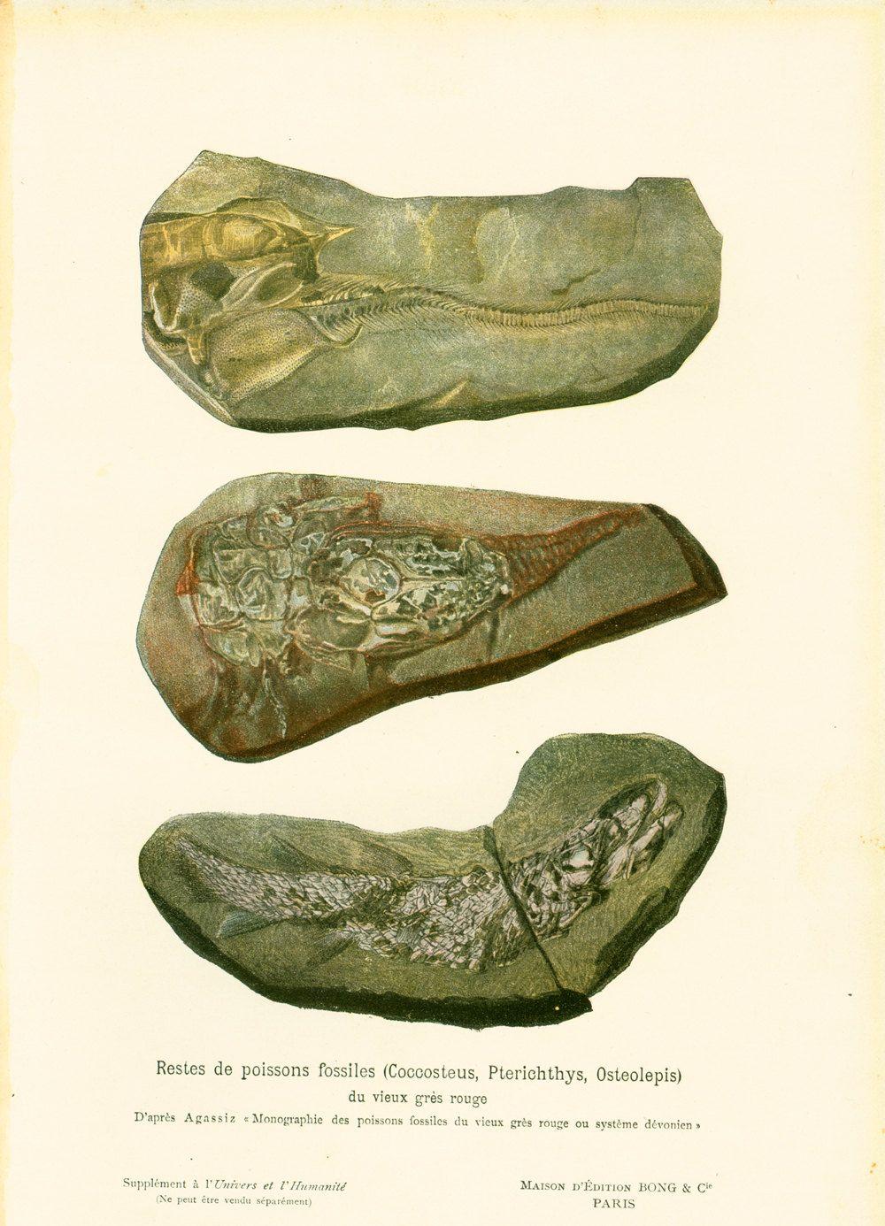 1908 Poissons Fossiles , Planche originale Ancienne Histoire Naturelle, Paléontologie. de la boutique sofrenchvintage sur Etsy