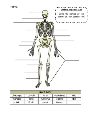 skeletal system quiz | science | pinterest | skeletal system, Skeleton
