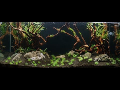 The BEST Aquascaping Shop I've ever visited - Find out why ...