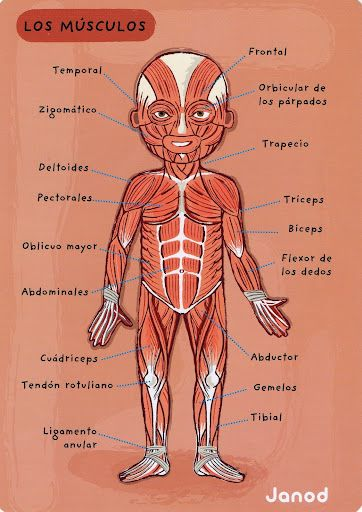 III, 7 - el cuerpo humano - Glria P - lbumes web de Picasa - check ...