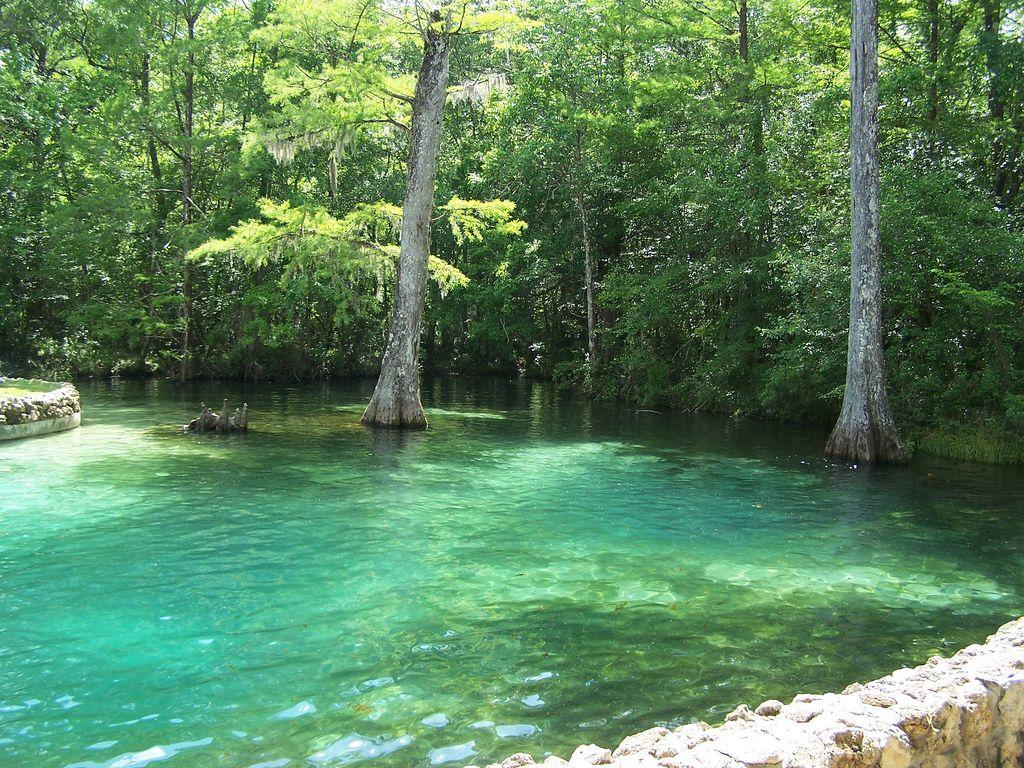 A Crystal Clear Pool Of Spring Water In De Leon Springs