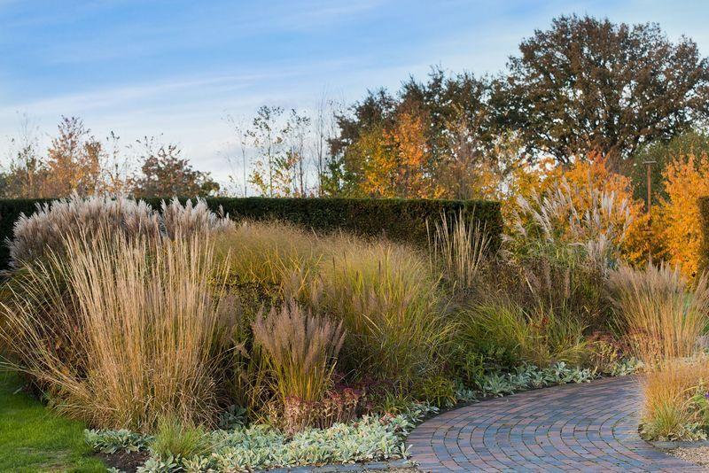 Schone Garten Fur Herbst Und Winter Kiesgarten Garten Graser Im Garten
