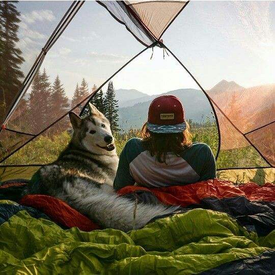 Adventures With Akiak The Husky Photo Perfect Shot - Guy quits his job to go on epic adventures with his husky