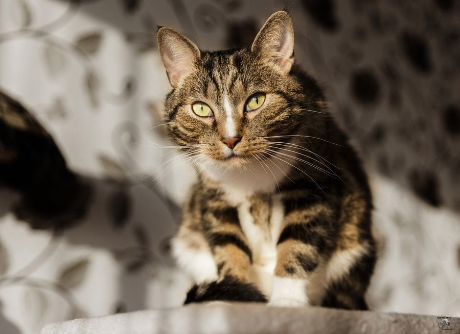 Curious cat by Filip M on 500px