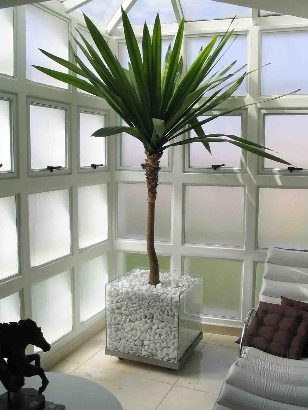 Plantas e vasos para interiores coloridos lisos ou - Plantas para patios interiores ...