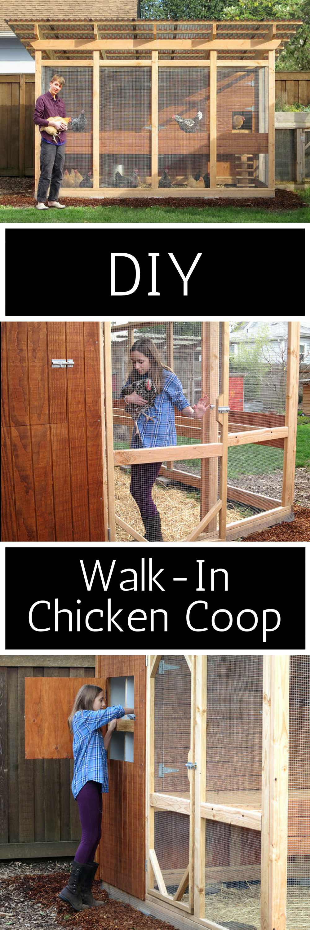 how to keep chickens safe from foxes