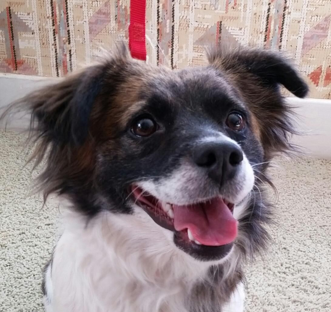 Adopt niblet on petfinder second chance animal rescue