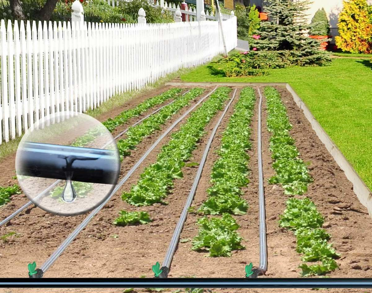 Modelo Riego Por Goteo Para Huertas Y Jardines Cultivo De Hortalizas Sistema De Riego Por Goteo Riego Por Goteo