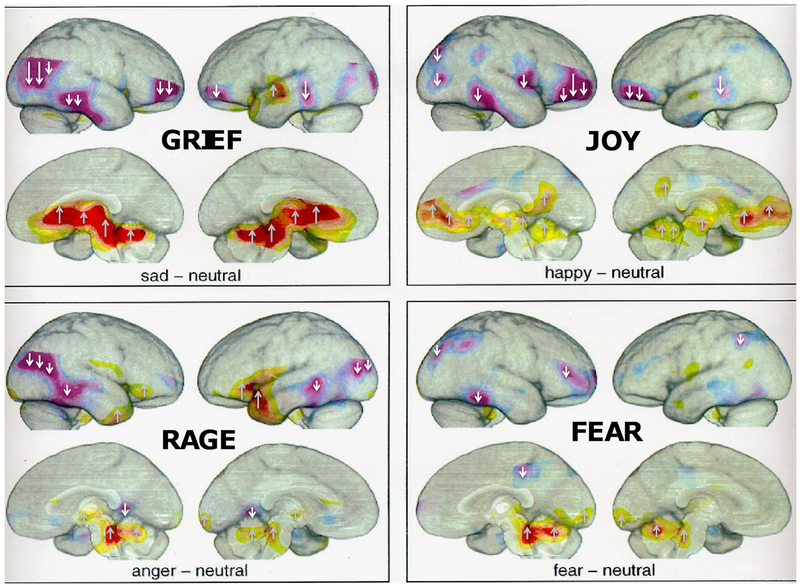 Got Science?: Rat Tickling and the Neuroscience of Emotions