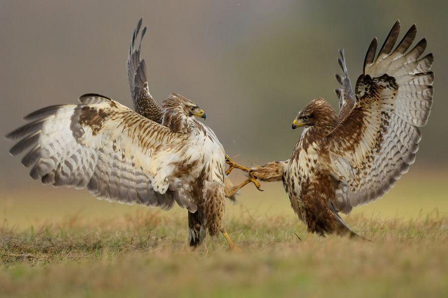 всего тюрьме фото орла и ястреба вместе набережная