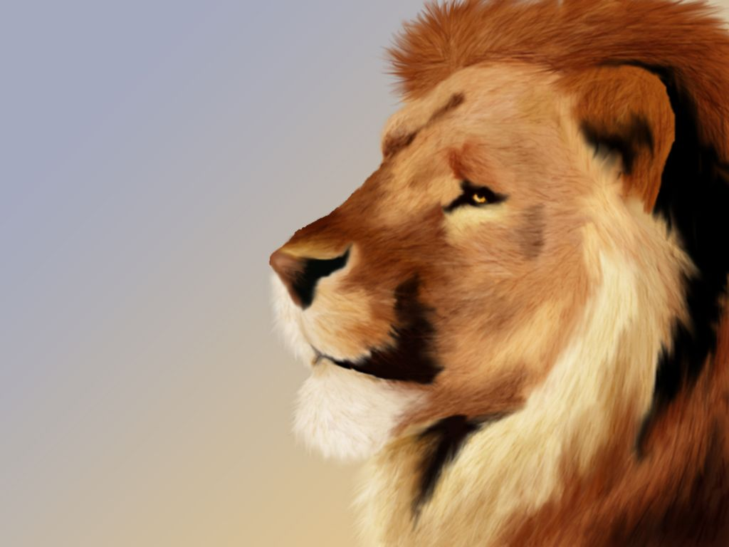 Download Aslan Wallpapers for android Aslan Wallpapers . download ... for Narnia Aslan Wallpaper  584dqh