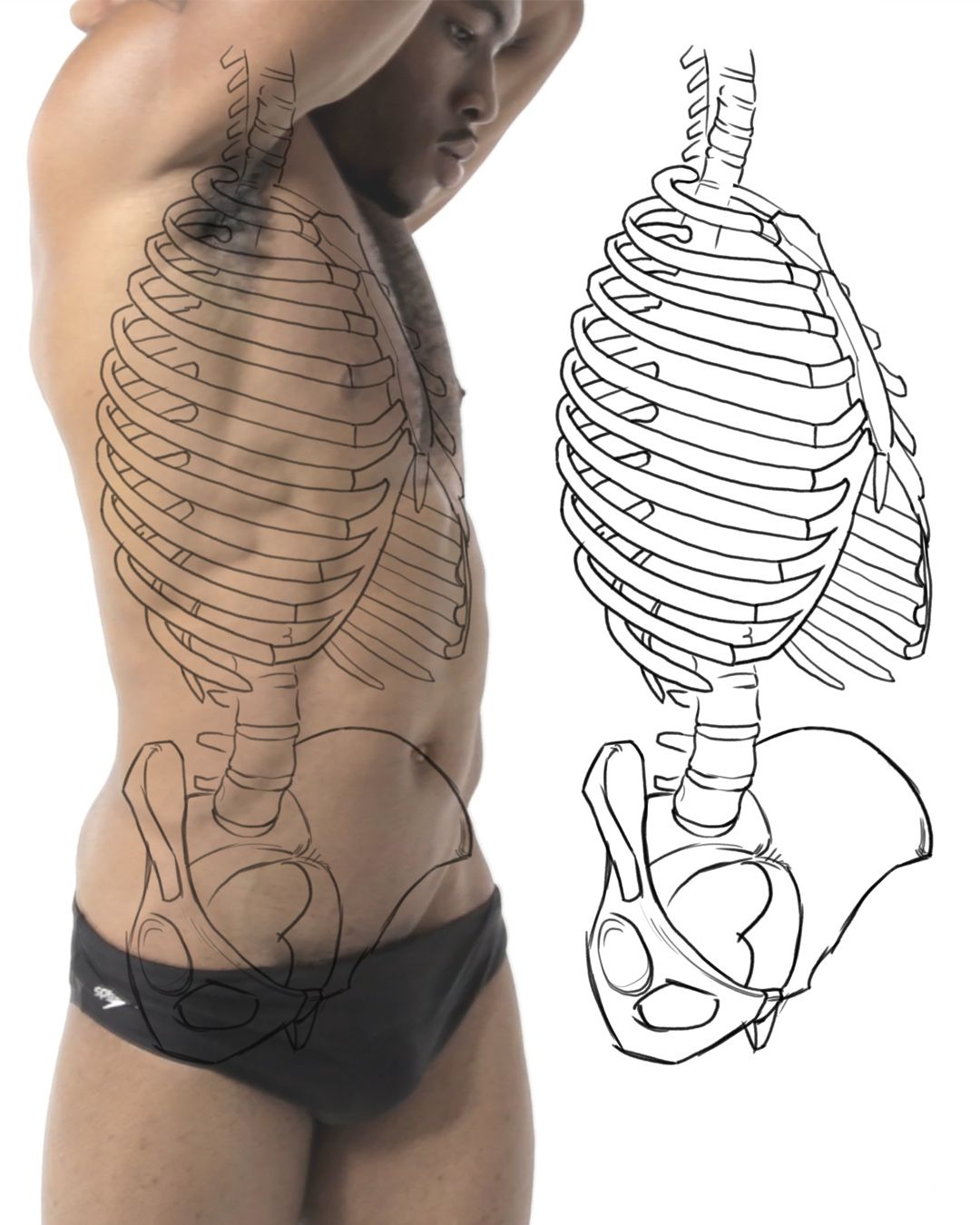 Practicing bone structure and landmarks of the torso. | Anatomy for ...