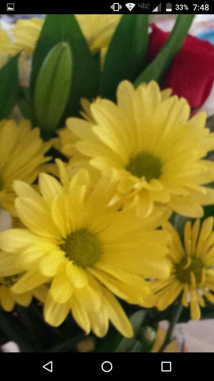 Pin by abigaile treace on flower wallpapers pinterest flower