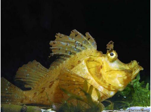 Картинки по запросу смешные фото рыб | Обои с животными ...