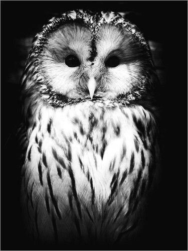poster eule tiere owl beautiful owl und owl pictures. Black Bedroom Furniture Sets. Home Design Ideas