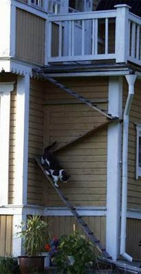 CAT -LADDERS: Björnäs, this design would provide a great cat workout in catio too:) #cats #catio